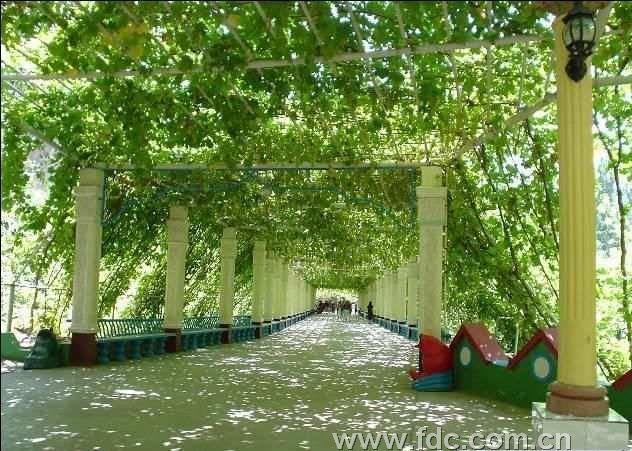 新疆乌鲁木齐 赛里木湖 伊犁霍城天山红花基地